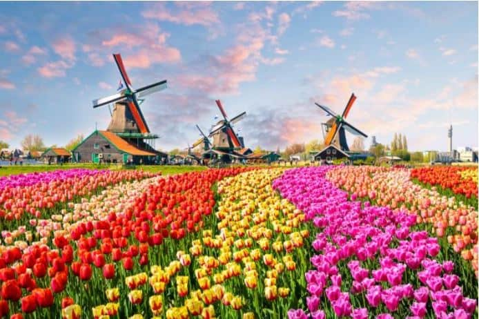 Escort Netherlands Field Of Tulips Paradise